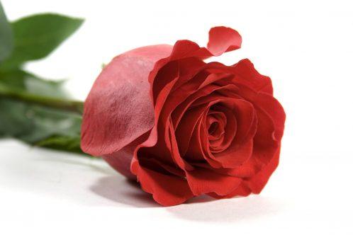 Romantik-Package